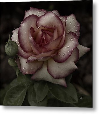 From Me To You Winter Rose Metal Print by Barbara Middleton