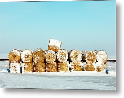 Frosted Wheats Metal Print by Todd Klassy