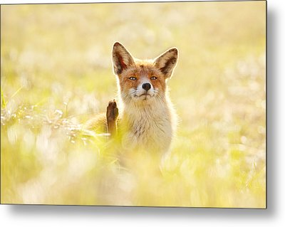 Funny Fox Is Funny Metal Print by Roeselien Raimond