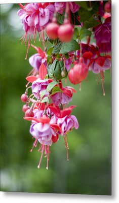 Fuschia Metal Print by Rockstar Artworks