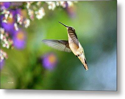 Garden Hummingbird Metal Print by Christina Rollo