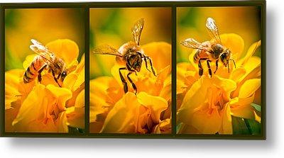 Gathering Pollen Triptych Metal Print by Bob Orsillo