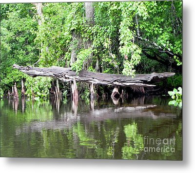 Gator Stump Metal Print by Jack Norton