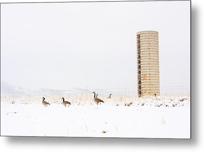 Geese In The Snow With Silo Metal Print by James BO  Insogna