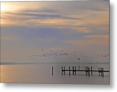 Geese Over The Chesapeake Metal Print by Bill Cannon