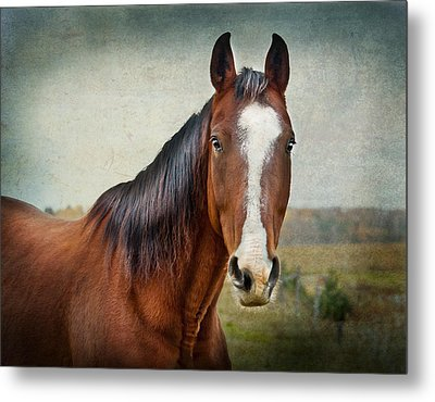 Gentle  Metal Print by Maggie Terlecki