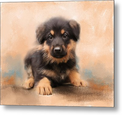 German Shepherd Puppy Portrait Metal Print by Jai Johnson
