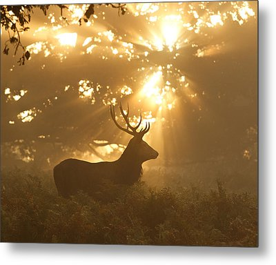 Ghost Of The Forest Metal Print by Greg Morgan