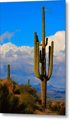 Giant Saguaro In The Southwest Desert  Metal Print by James BO  Insogna