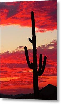 Giant Saguaro  Southwest Desert Sunset Metal Print by James BO  Insogna