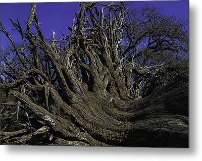 Giant Tree Roots Metal Print by Garry Gay