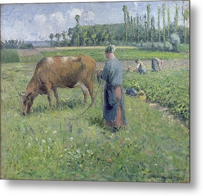 Girl Tending A Cow In Pasture Metal Print by Camille Pissarro