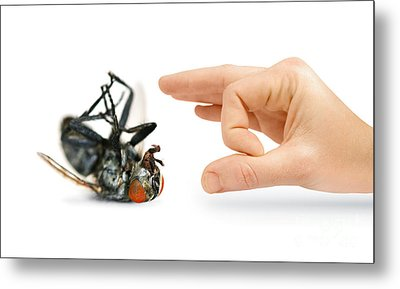 Give Pests The Flick Metal Print by Jorgo Photography - Wall Art Gallery