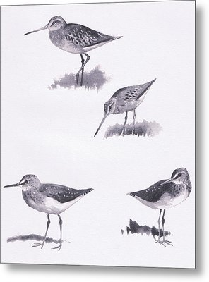 Godwits And Green Sandpipers Metal Print by Archibald Thorburn