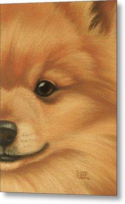 Goggie Pomeranian Metal Print by Karen Coombes