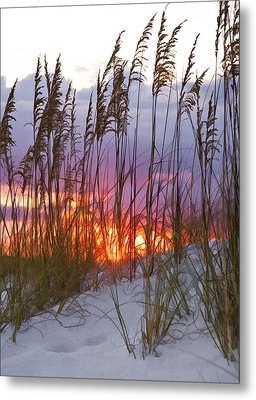 Golden Amber Metal Print by Janet Fikar