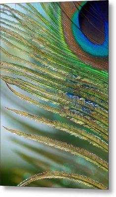 Golden Feather Metal Print by Lisa Knechtel