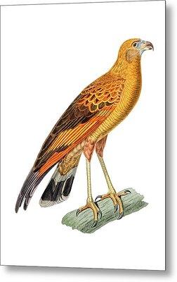 Golden Headed Preditor Metal Print by Douglas Barnett