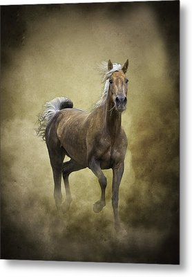 Golden One Metal Print by Ron  McGinnis