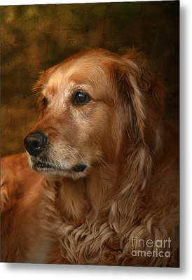 Golden Retriever Metal Print by Jan Piller