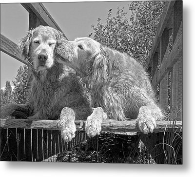 Golden Retrievers The Kiss Black And White Metal Print by Jennie Marie Schell