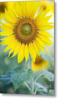 Golden Sunflower Metal Print by Tim Gainey