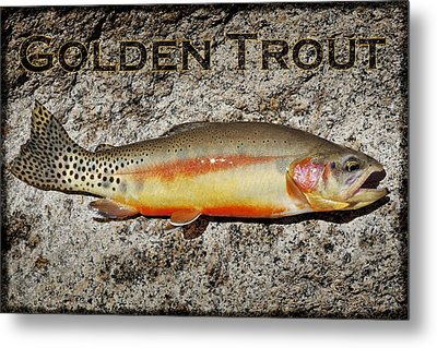 Golden Trout Metal Print by Kelley King