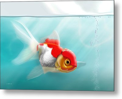 Goldfish 13x19 Metal Print by John Wills