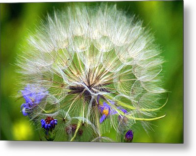 Gone To Seed Metal Print by Marty Koch