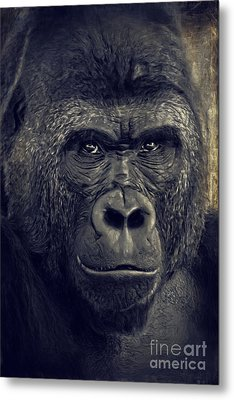 Gorilla Metal Print by Angela Doelling AD DESIGN Photo and PhotoArt