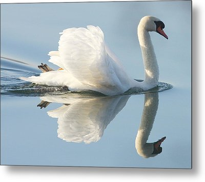 Graceful Swan Metal Print by Andrew Steele