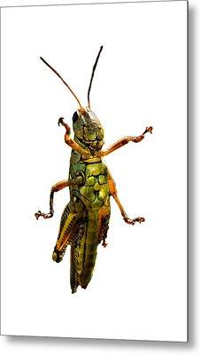 Grasshopper II Metal Print by Gary Adkins
