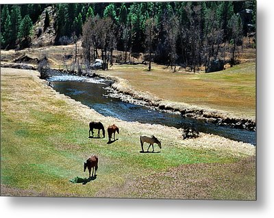 Grazing 2 Metal Print by Angelina Vick