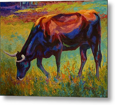 Grazing Texas Longhorn Metal Print by Marion Rose