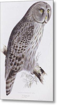 Great Cinereous Owl Metal Print by John Gould