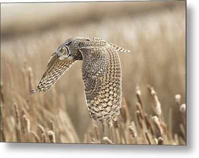 Great Horned Owl Metal Print by Peter Stahl