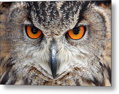 Great Horned Owl Metal Print by Pierre Leclerc Photography