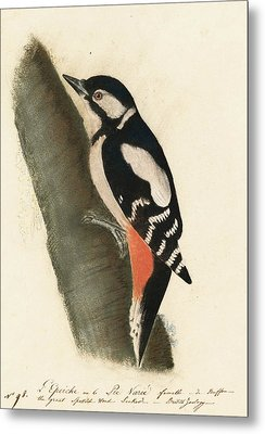 Great Spotted Woodpecker Metal Print by John James Audubon