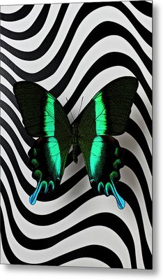 Green And Black Butterfly On Wavey Lines Metal Print by Garry Gay