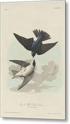 Green-blue Or White-bellied Swallow Metal Print by John James Audubon