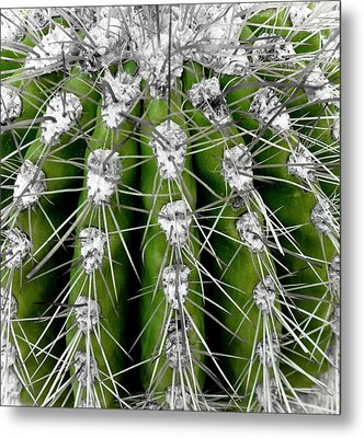 Green Cactus Metal Print by Frank Tschakert