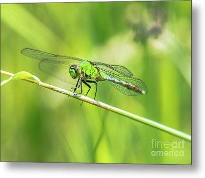 Green Dragonfly Metal Print by Cheryl Baxter