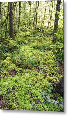 Green Foliage On The Forest Floor Metal Print by Craig Tuttle