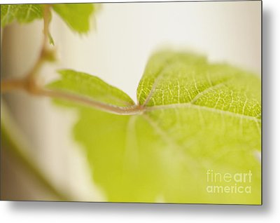 Green Grapevine Leaf Metal Print by Sami Sarkis