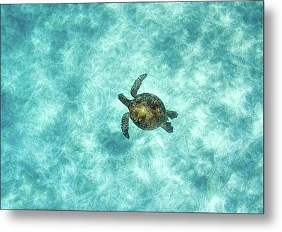 Green Sea Turtle In Under Water Metal Print by M.M. Sweet