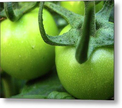 Green Tomatoes No.3 Metal Print by Kamil Swiatek