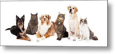 Group Of Cats And Dogs Metal Print by Susan Schmitz