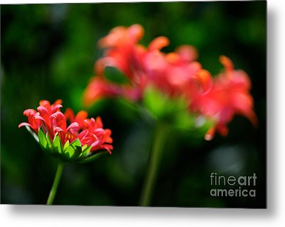 Growing Up Metal Print by Lois Bryan
