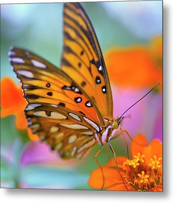 Gulf Fliterary Butterfly Metal Print by Joel Olives Photography