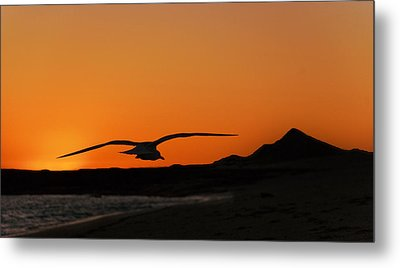 Gull At Sunset Metal Print by Dave Dilli